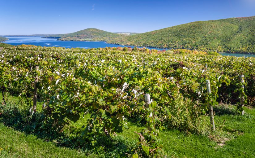 Finger Lakes – #1 Wine Region in the Nation
