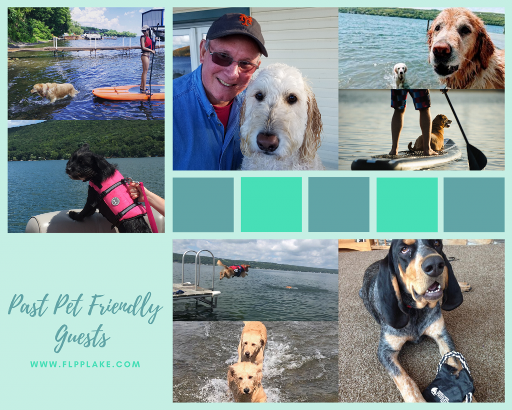 finger lakes dog activities