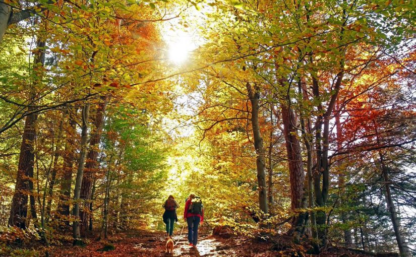 best state parks in the finger lakes region, couple hiking, colorful fall foliage